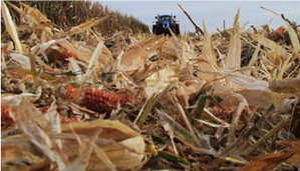 Corn Stover, Summit Livestock Facilities, Beef Barns