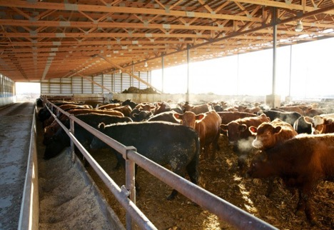 summit livestock facilities_damaged soybeans