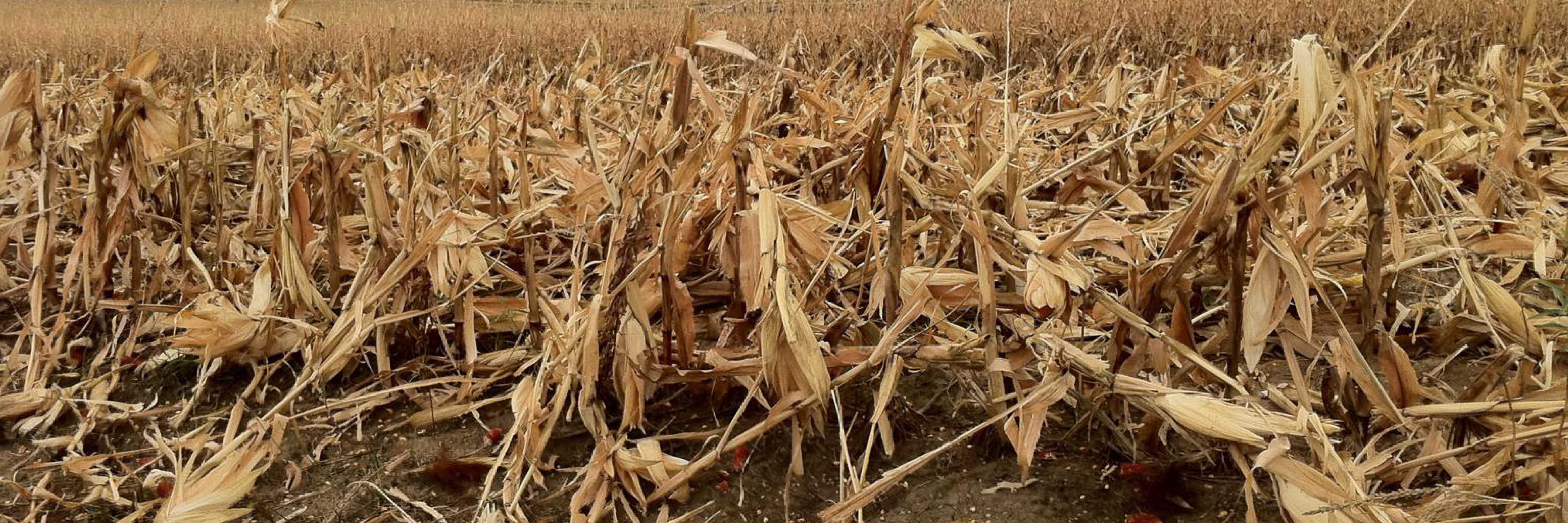 Calculating the Nutrient Value of Corn Stover