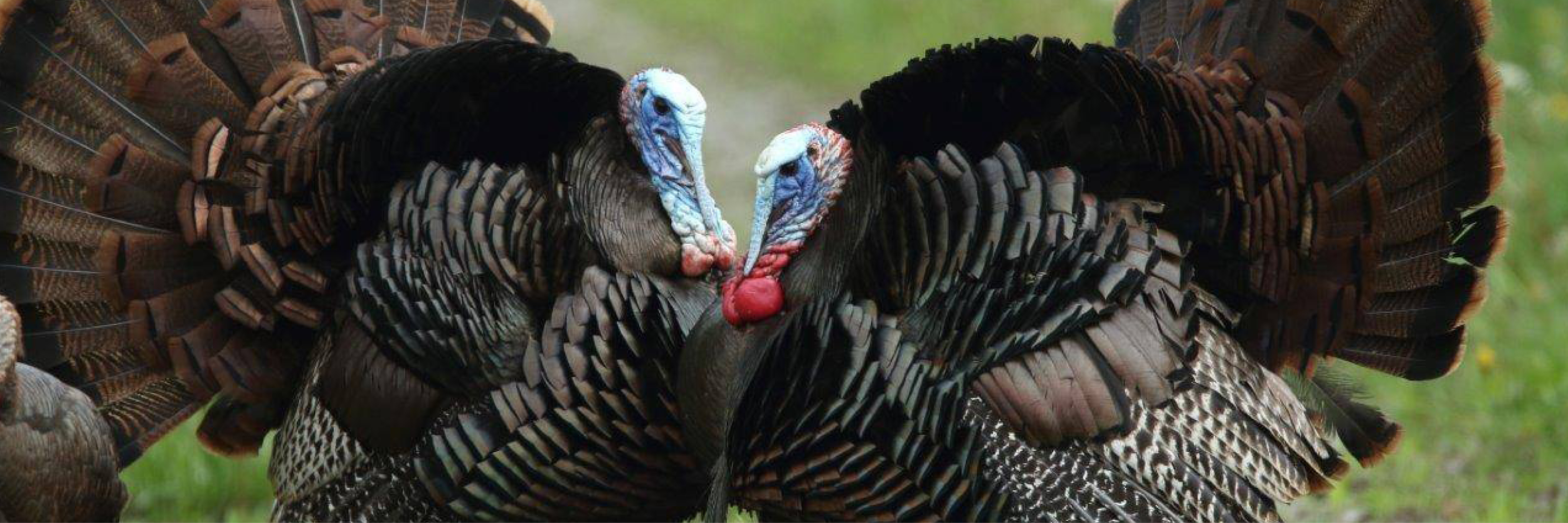 Turkey Time – Production, Price and People